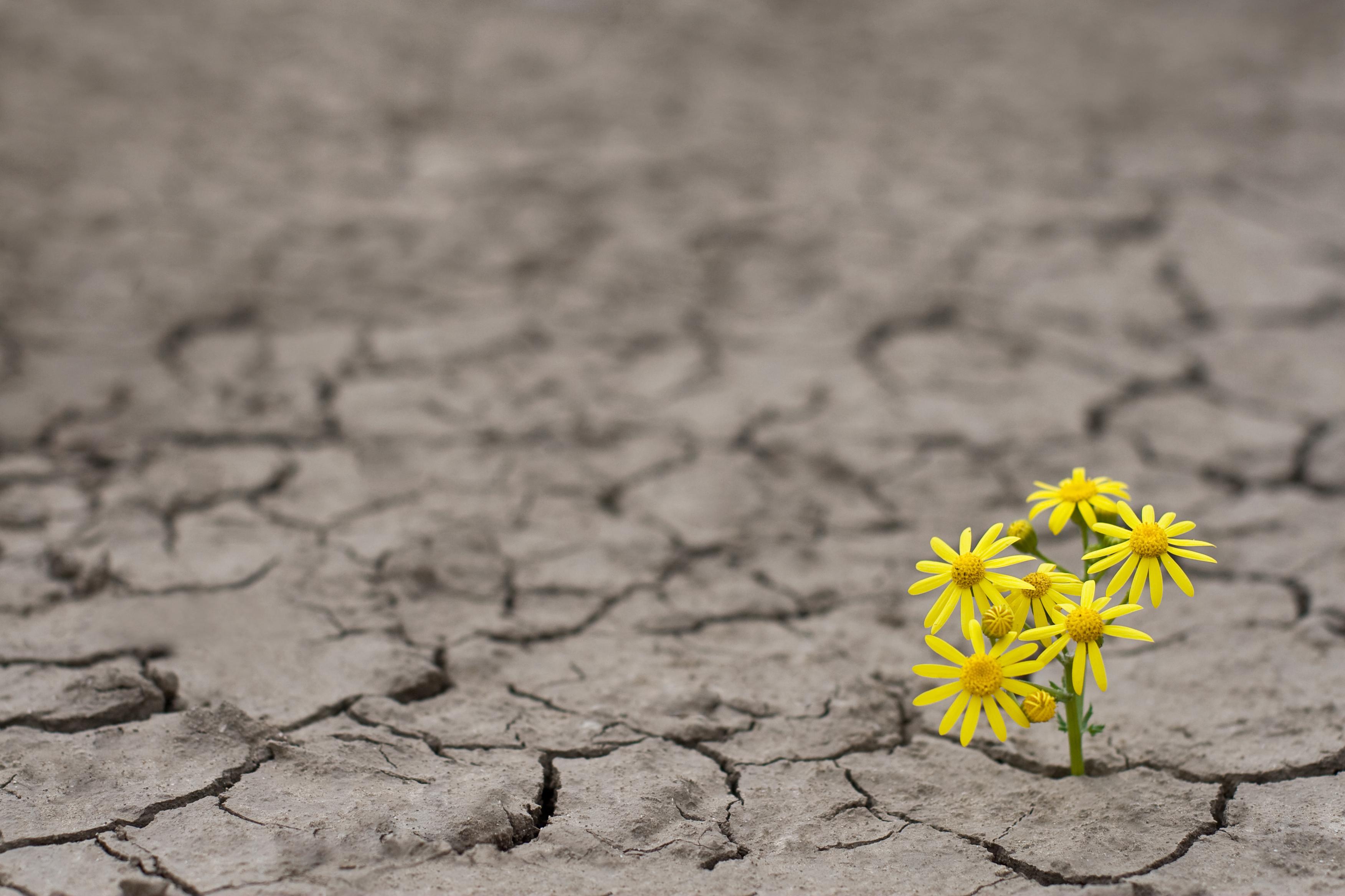 Protesta versus resiliencia